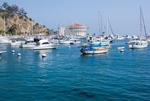 Santa Catalina Island / by Cheryl Valle
