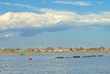Oyster Farms