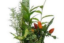 plantas espantar olho gordo