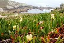 Guided Tours Costa da Morte - Lighthouses - Finisterre / Day Trips, excursions and tour guides in this rough part of the coast of Galicia.