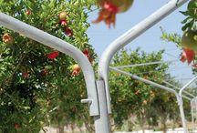 """Sistemi per l'agricoltura / La ditta """"ANTONIO CHITTANO Costruzioni Meccaniche"""" ha realizzato """"YPSILON"""" il primo sistema di sostegno per alberi da frutto che favorisce la crescita ottimale della struttura delle piante contrastando possibili rotture dei rami sotto il peso eccessivo del carico di frutti. Pensato per le piantagioni di Melograno, """"YPSILON"""" può essere sfruttato anche in altri ambiti come vigneti, pergolati, agrumeti e altre piantagioni di alberi da frutto."""