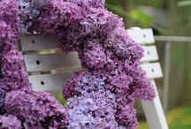Lilac - georgeous pictures and ideas