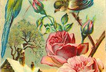 Stare kartki pocztowe i ilustracje