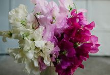 floral board: sweet peas  / by The Perfect Petal