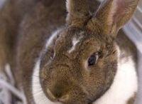 My new bunny!