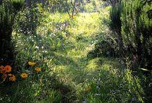 zahrada divoká