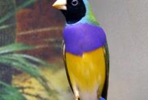 Incredible Birds