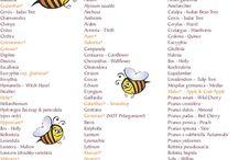 Pszczelarskie