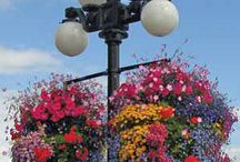 Favourite hanging baskets / Seeing as we sell hanging basket liners, the best ever!!
