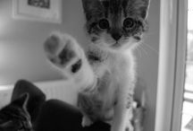 Loving Cats !