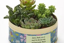 Succulents / Beautifully structured succulent Flowercards add a twist to the traditional. Sturdy, rugged and totally unique, what's not to love?