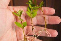 Размножение, пересадка растений