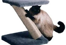 Cat Scratchers and Scratching Posts / Providing a cat scratching post to keep your cat's claws neat and tidy will prevent infection, inflammation and general discomfort for your feline. Sisal is irresistible to cats as they enjoy the texture of it immensely.