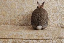 Bunnies / by Shanna Cifuentes