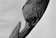 бионика архитектура и дизайн