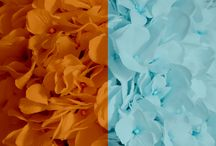 Orange + Aqua Weddings / Orange and aqua wedding ideas! From floral and reception, to bridesmaid dresses and wedding invitations!