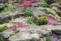Rock and shade garden