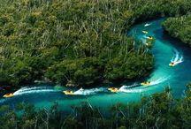 ジャングルツアー / スピードボードとカリブ海でのシュノーケリングが楽しめるエキサイティングでお得なツアー!!