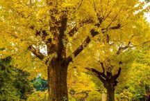 Destinos de outono / Fotos de outono em diversos países. Paisagens de outono para inspirar viajantes a desbravar o mundo. Melhor época para ver o outono no hemisfério norte.  By Adriana Lage