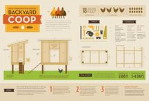Chickens and their homes