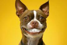Pedigree FIT DOG / Hoe fit is jou hond? Zelf kun je kiezen hoe gezond je wilt leven, maar het aanvoelen van een hond is een ander ding. Doe de test en kom erachter wat jou hond nodig heeft.
