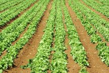Bautista Organic Farm Philippines / All about organic farming and tips! / by Arnel Bautista
