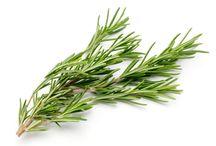 Rosemary Recipes