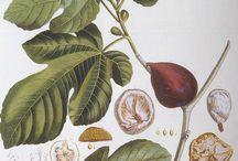 Botanical & Other Scientific Prints / by Gwyneth Chenoweth Knolls