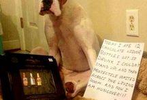 Cani, cani, cani e cani! No gatti! Solo cani!!!! / C'è solo un animale al mondo. IL CANE. Il resto è pupù! (di cane!!!!)