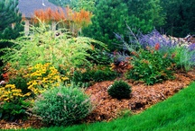 Landscaping / by Debi Stewart
