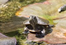 Tiny Turtle / This year, Metro Parks volunteer Bob Roach has been photographing a tiny turtle in the Rock & Herb Garden at F.A. Seiberling Nature Realm. We rounded up the pics to create a board bursting with cuteness.