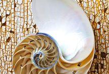 Nature - Spirals