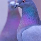 птицы небесные