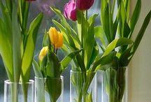 Tulpen Gläser