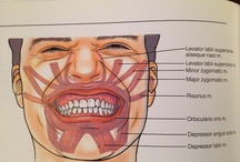 Animatronics of a face
