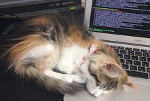喫ねこ所 / 弊社には猫飼いたちと猫好きのあつまる「喫ねこ所」的な社内チャットがあります。そこで投下される癒しと、猫飼いと獣医さん協力の元作成した、猫飼いたい勢のためのハウツーを、そっとお見せします。#nanapi猫部