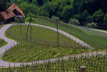 Vineyard Pics