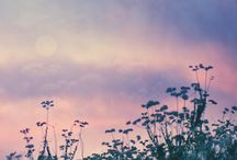 Summer / by Daniela Wendy