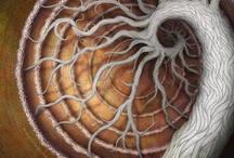 Espirales de la Vida