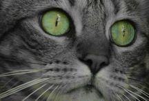my cat pics
