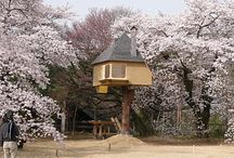 tree houses and fancy sheds / even chicken coops and bird houses count !
