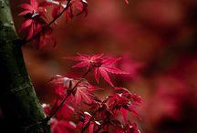 Seasons: Fall / Anything Fall related