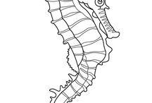 tengeri minták
