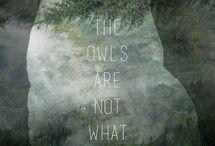 Owls / animal - bird