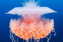 Медузы * Medusa