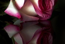 Orchid/Peony/Rose / GORGEOUS!!