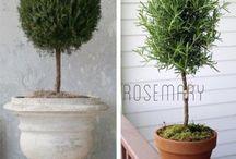 Garden Plants & ideas