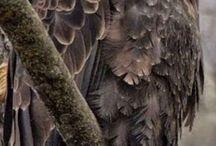 photos of bald eagles