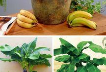 bitki panosu