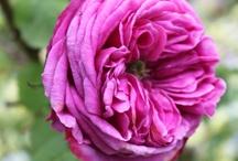 Things I'd like in my garden / by Rita Kelly